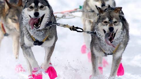 Pink pups
