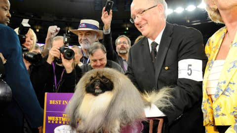 Malachi the Pekingese wins Best in Show