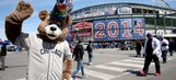 Bad news bear: Cubs sue over fake mascot that was in bar fight
