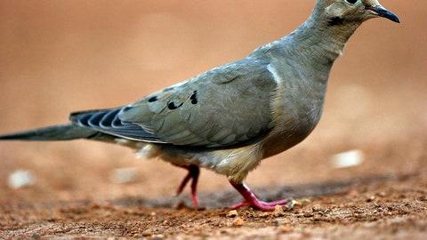 Randy Johnson: Bird hunter