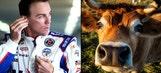 Kevin Harvick taking no 'bull' in final weeks of season