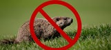 No groundhog crossing: Pocono Raceway is not a good place for critters