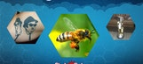 Best Tweets: Bees, Breakdancing & The Blues Brothers