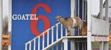 Dega Winner David Ragan Has A Goat Hotel & Mini Donkeys