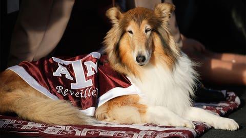 Reveille - Texas A&M Aggies
