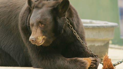Lady & Joy - Baylor Bears