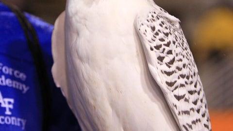 Aurora - Air Force Falcons