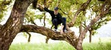 The eccentric Jim Harbaugh climbed a tree during effort to recruit top CB talent