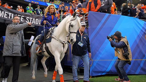 Denver's noble steed