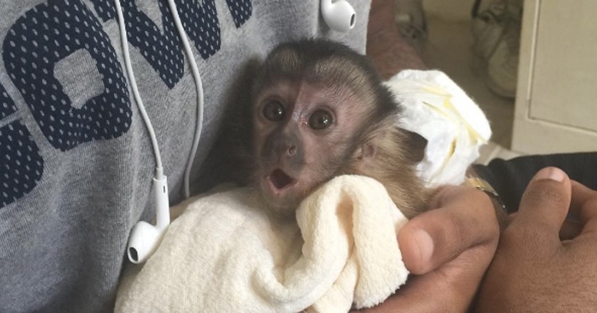 Dez Bryant had to give away his pet monkey 'Dallas'   FOX Sports