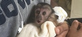 Dez Bryant had to give away his pet monkey 'Dallas'