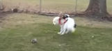 NFL VP of officiating gives his ruling on an adorable dog's huge tackle on a child