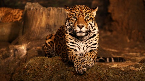 """""""Brazil's Olympic Torch Relay Goes Well Until Jaguar Is Shot and Killed"""""""